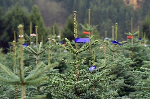 Unbekannte schneiden Hunderten Christbäumen Spitze ab