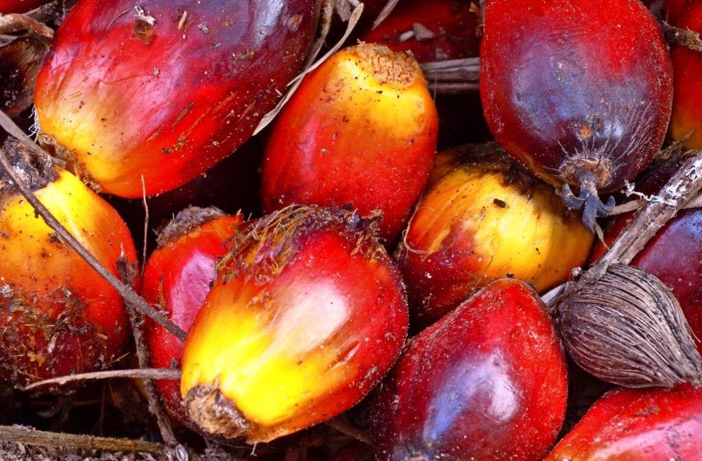 Wie kleine rötliche Pflaumen sehen die Früchte der Ölpalme aus Foto: WWF