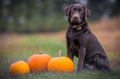 Schicken Sie uns Ihre schönsten Hundefotos!