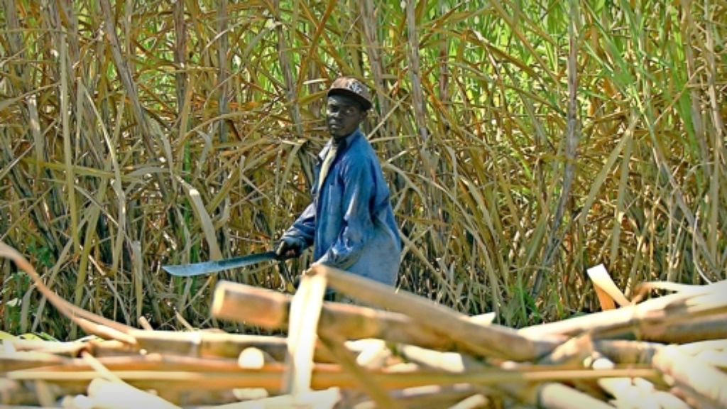 Das Filmteam ist für seine Recherchen viel gereist – und hat unter anderem die Zuckerrohrernte in Léogâne, Haiti Foto: Arte