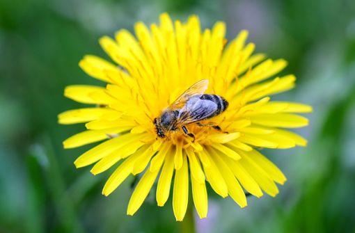 Bienen-Retter überreichen Unterschriften