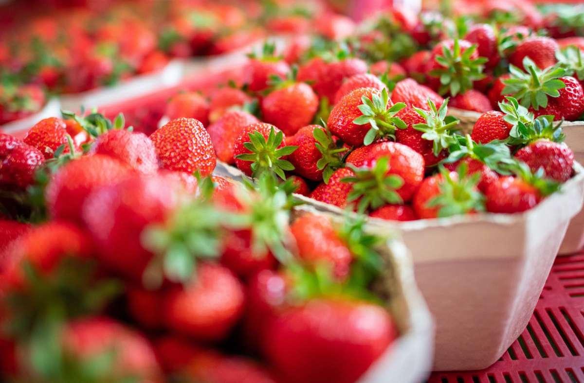 Erdbeeren aus der Region gibt es in dieser Jahr erst später. Foto: dpa/Guido Kirchner