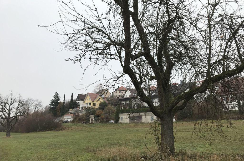 Häuser statt Biotope? Der Untere Schützenrain am nördlichen Stadtrand. Foto: Slotwinski