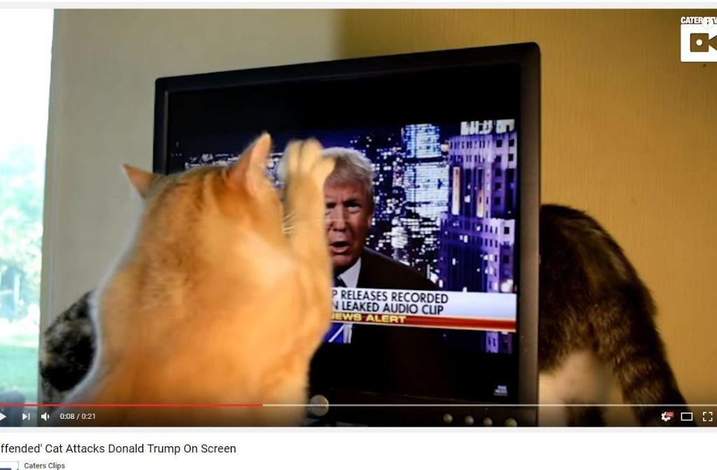 Diese Katze kann Donald Trump offenbar nicht leiden. Foto: Screenshot Youtube / Caters Clips