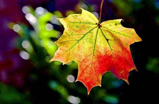 Warum verfärben sich die Blätter im Herbst?