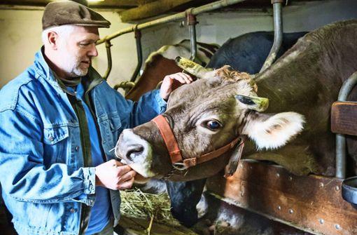 Nur noch ein Bruchteil der Rinder von 1979