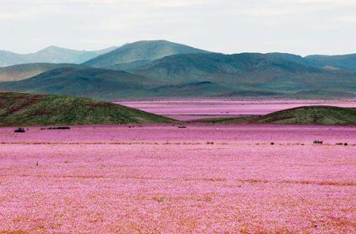 Wie Plantagen  Regen in die Wüste  bringen