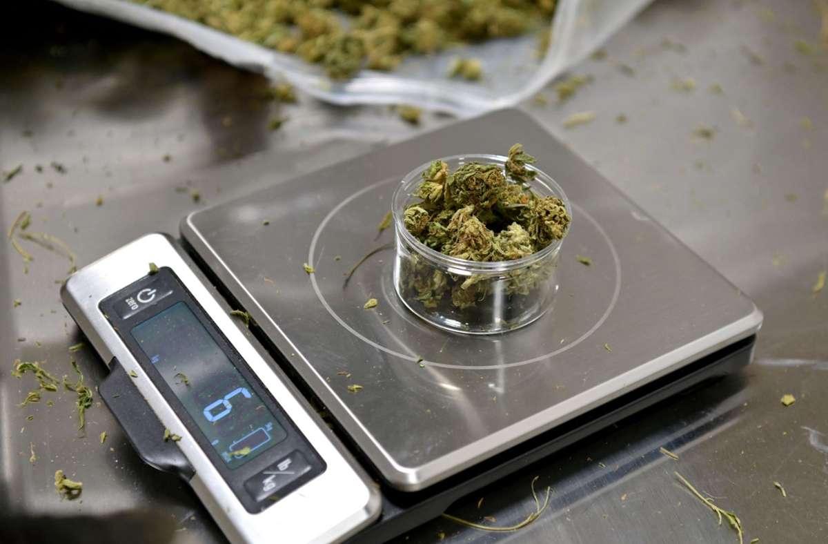 Künftig soll der Besitz von Cannabis bis zu zehn Gramm nicht bestraft werden – bisher waren es nur sechs Gramm. Foto: AFP/ANGELA WEISS