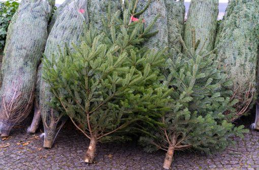 Preise für Weihnachtsbäume könnten steigen