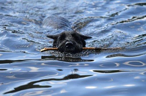 Hund schwimmt kilometerweit zurück zum Herrchen