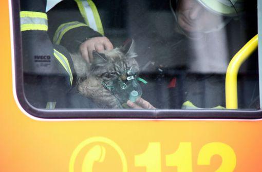 Feuerwehr rettet und beatmet Katze