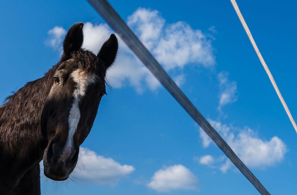 Ein kurioser Unfall mit einem scheuenden Pferd hat sich in Wendlingen zugetragen. (Symbolbild) Foto: dpa