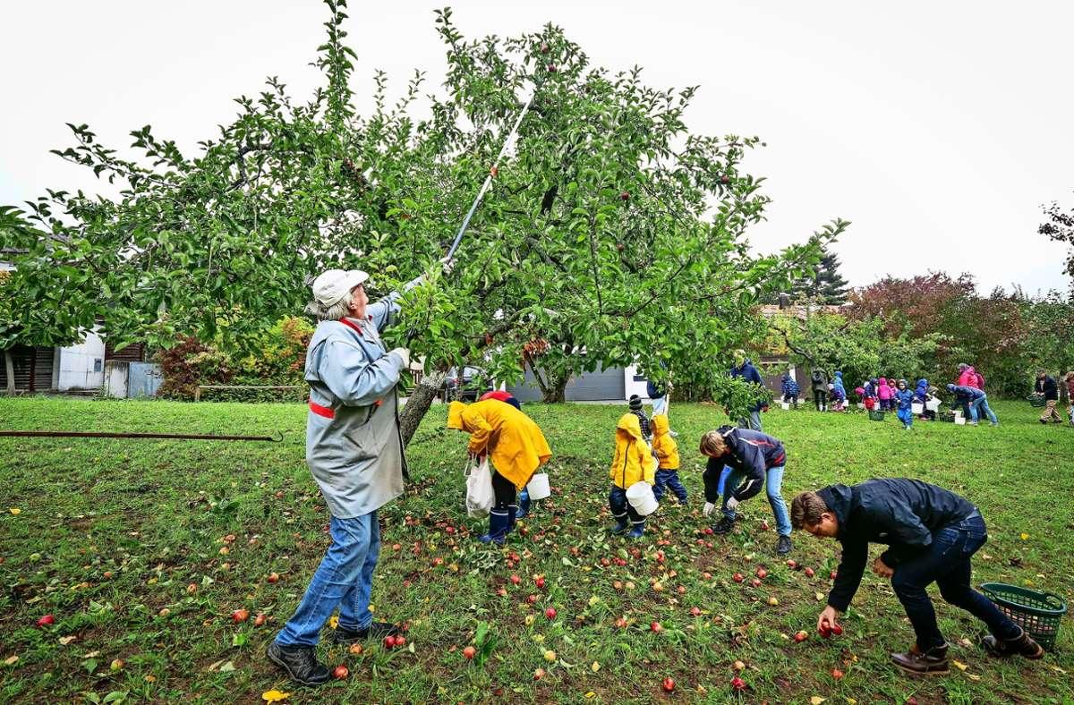 Ehrenamtliche haben Kindergartenkindern beim Ernten geholfen. Foto: factum/Simon Granville