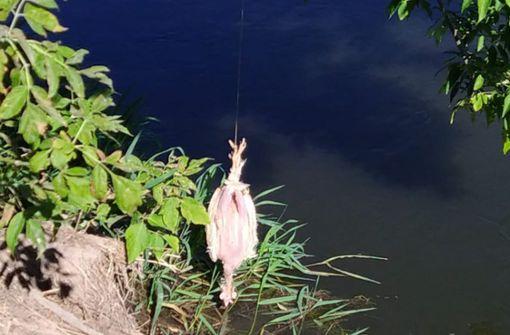 Lock-Huhn wird auch am Wochenende auf- und abgehängt