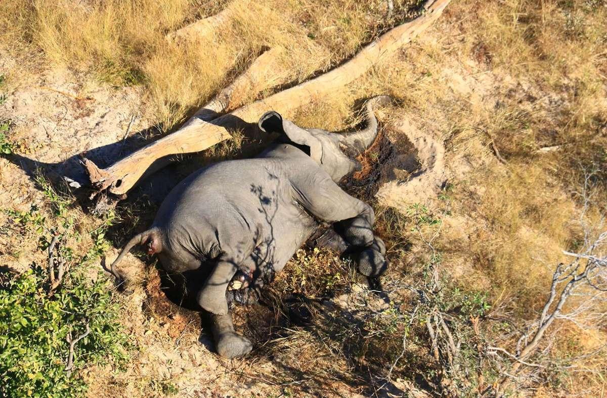 Ein toter Elefant liegt in einem Gebüsch. Im südafrikanischen  Botsuana und Simbabwe treibt ein mysteriöses Elefantensterben Tierschützer um. Foto: Uncredited/hons/AP/dpa