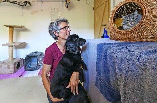Tiere suchen eine Pflegestelle