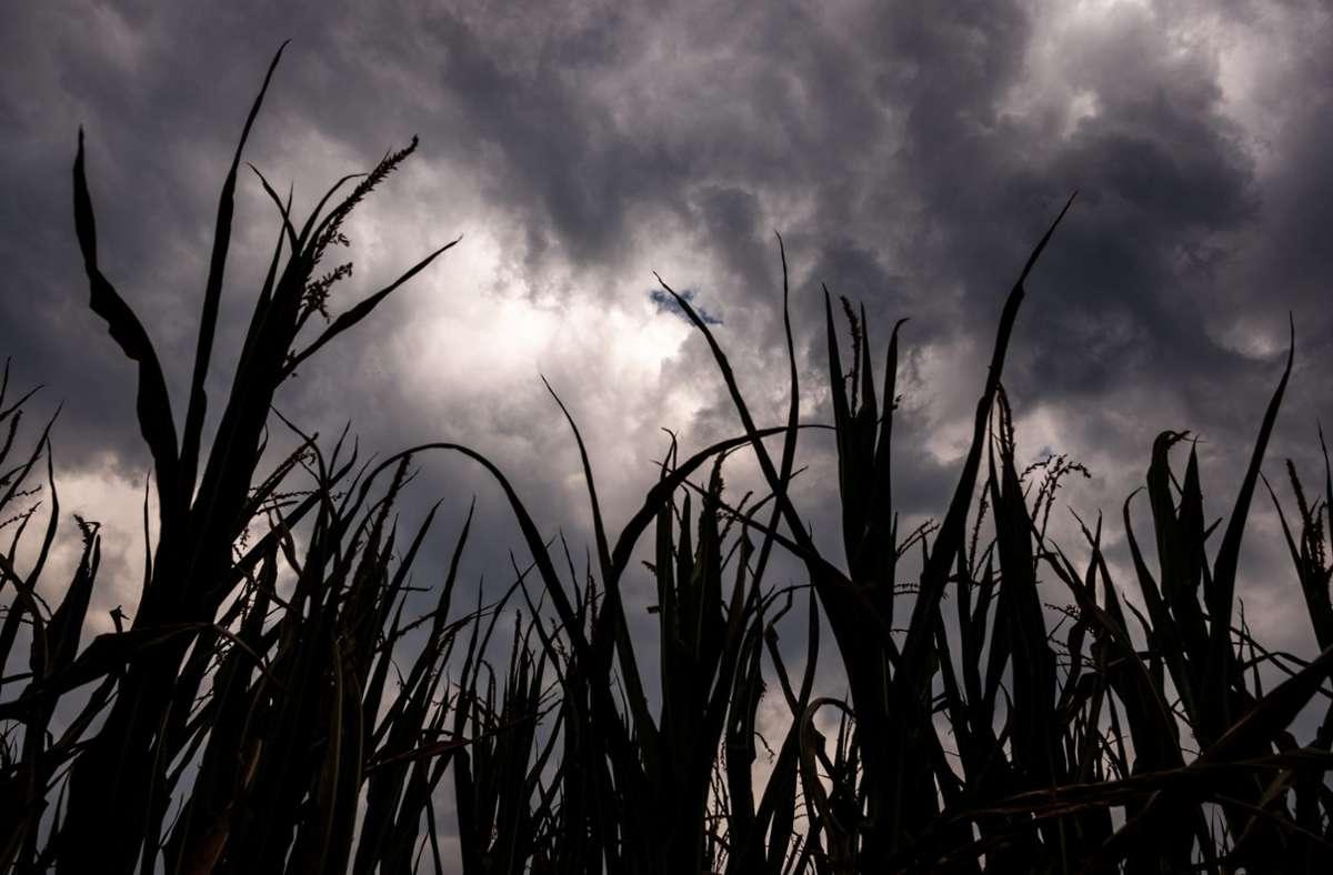 Gewitterwolken (Archivbild) Foto: dpa/Mohssen Assanimoghaddam