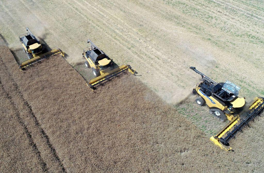 Mecklenburg-Vorpommern, Neubukow: Auf einem Feld der Agrargenossenschaft Hellbach wird Raps geerntet. Die Dürre sorgt dabei nach zwei schlechten Erntejahren für ein weiteres Jahr mit Einbußen. Foto: dpa