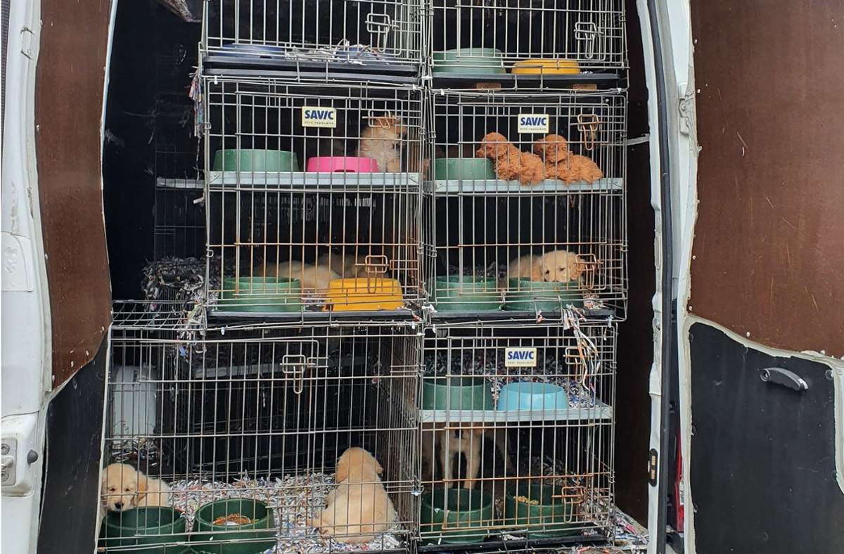 Zu jung und krank: Der Zoll befreite 97 Hundewelpen aus einem Transporter. Foto: Hauptzollamt Ulm