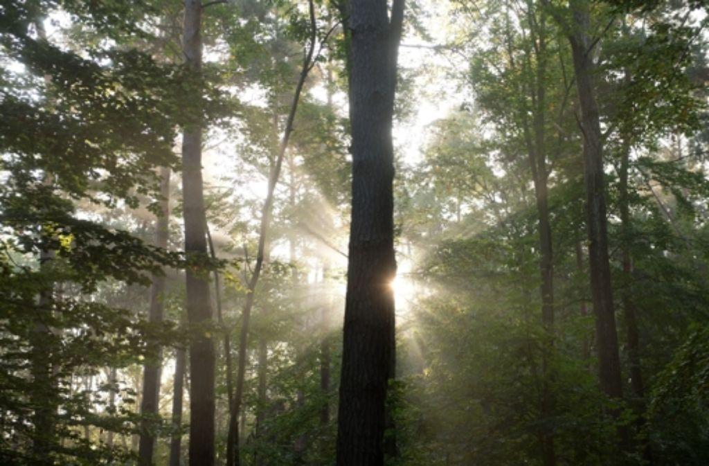 Erste Fortschritte im Streit des Landes mit dem Kartellamt über die Bewirtschaftung des Waldes: die Zehn-Jahres-Planung, die sogenannte Forsteinrichtung, bleibt hoheitliche Aufgabe. Foto: dpa