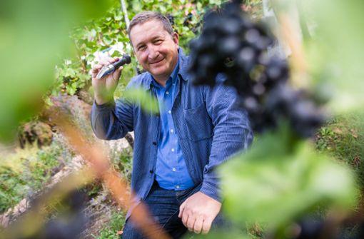 Württemberger Erfolge beim Rotweinpreis