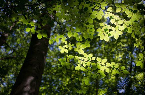 Umweltsünder entsorgt Öl im Wald