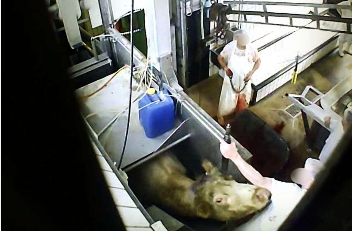 Aus dem Schlachthof Biberach sind jetzt Foto: Soko/ Tierschutz