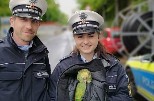 Polizei rettet verletzten Papageien