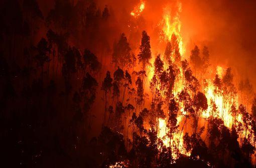 62 Menschen sterben bei Waldbränden