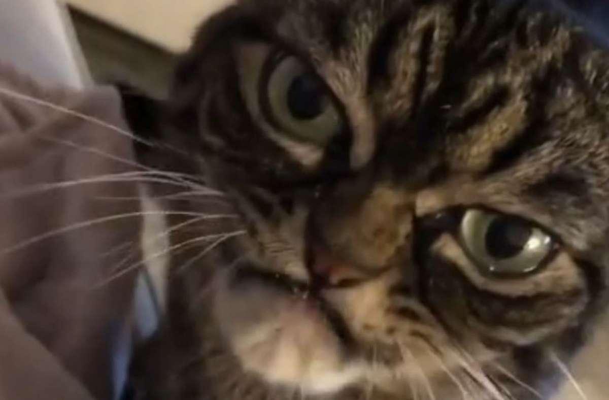 Mit ihrem Instagram-Kanal will Angry Grumpy Kitzia die Nachfolgerin von Grumpy Cat werden. Foto: Instagram/@grumpy_kitzia