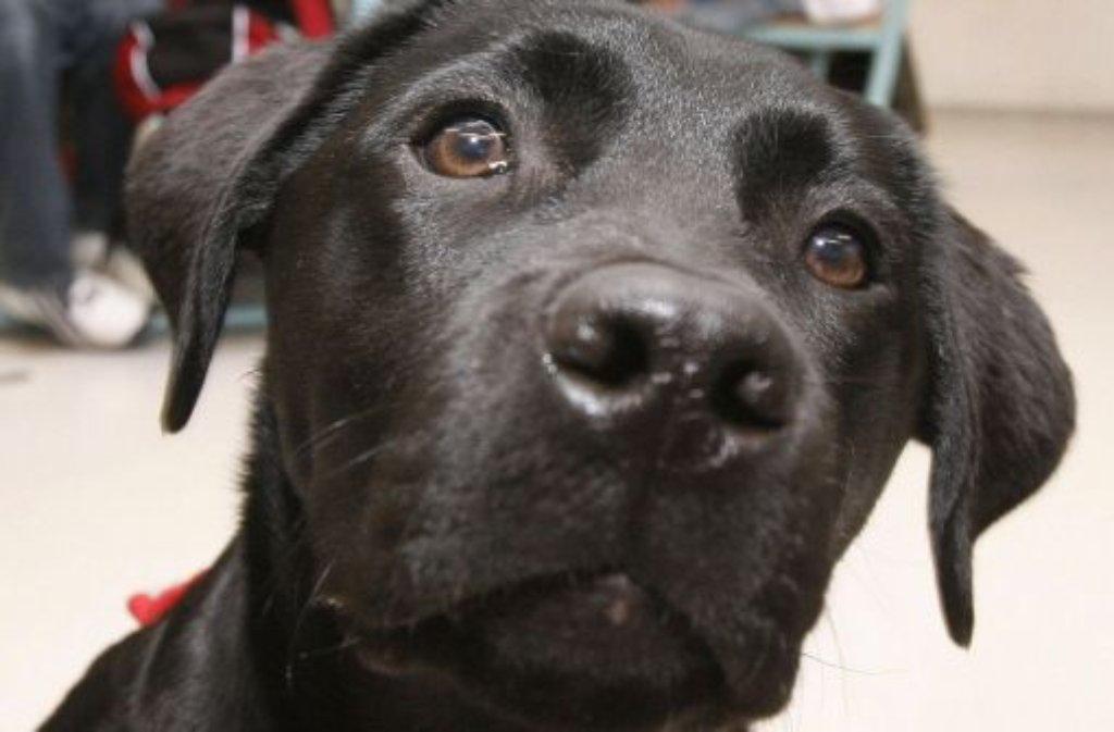Was können Hunde wirklich? Forscher wollten dies herausfinden. Foto: dpa
