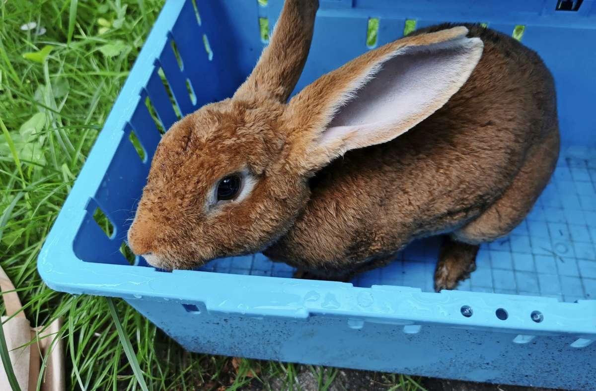 Dieses Kaninchen wurde jüngst in Birkach gefunden. Foto: privat