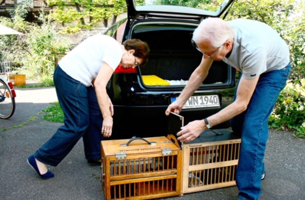Noller von der Katzenhilfe Stuttgart und ihr Mann kümmern sich wie auch der Tierschutzverein Filderstadt um herrenlose KatzenIngrid Noller von der Katzenhilfe Stuttgart und ihr Mann kümmern sich wie auch der Tierschutzverein Filderstadt um herrenlose Katzen. Foto: Wipke Hartje