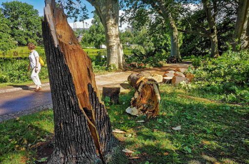 Mindestens 15 alte Bäume im Park entwurzelt