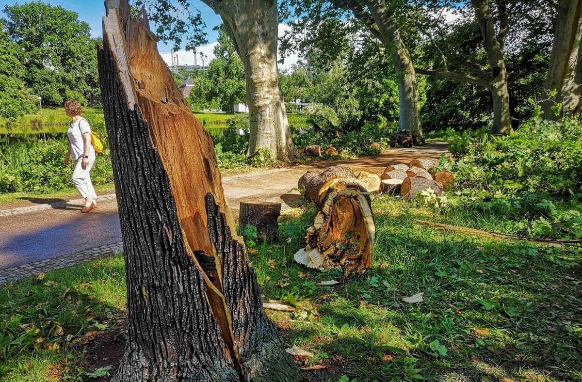 Große alte Bäume sind bei dem Sturm umgeknickt. Foto: Lichtgut/Max Kovalenko