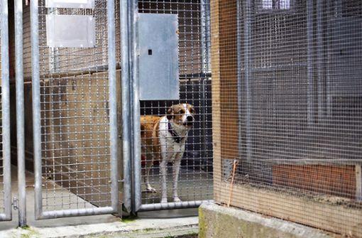 Benefizkonzert zugunsten des neuen Tierhauses