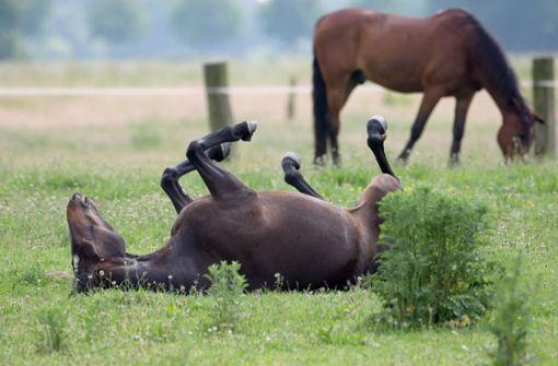 Tragischer Tod eines Pferdes beschäftigt das Gericht