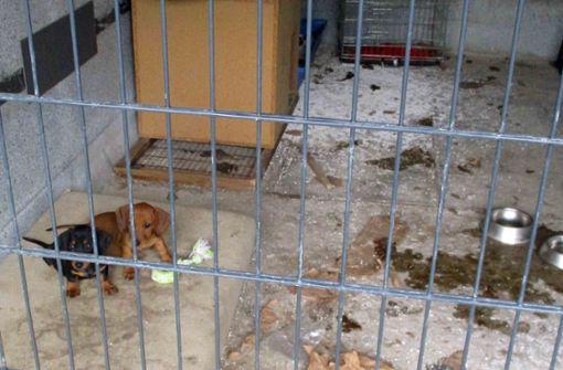 Welpen in Garage gefunden – Verdacht auf illegalen Handel