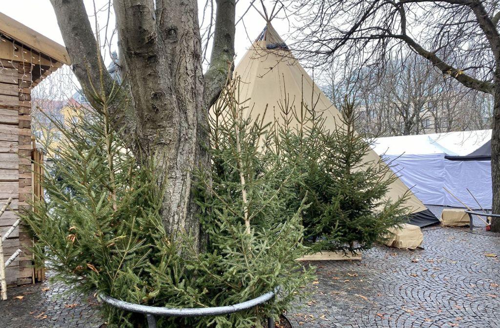 Weihnachtsbäume beim  finnischen Weihnachtsdorf auf dem Stuttgarter Karlsplatz. Foto: jan