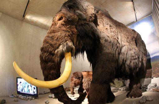 Mammut-Backenzahn bei Brunnenbohrung entdeckt