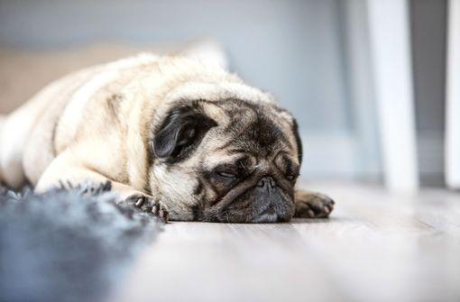 Wann sollte ich mein Tier einschläfern lassen?