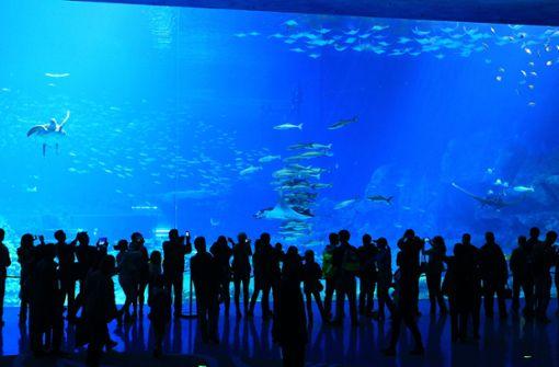 Mann steigt ins Aquarium und lässt sich filmen
