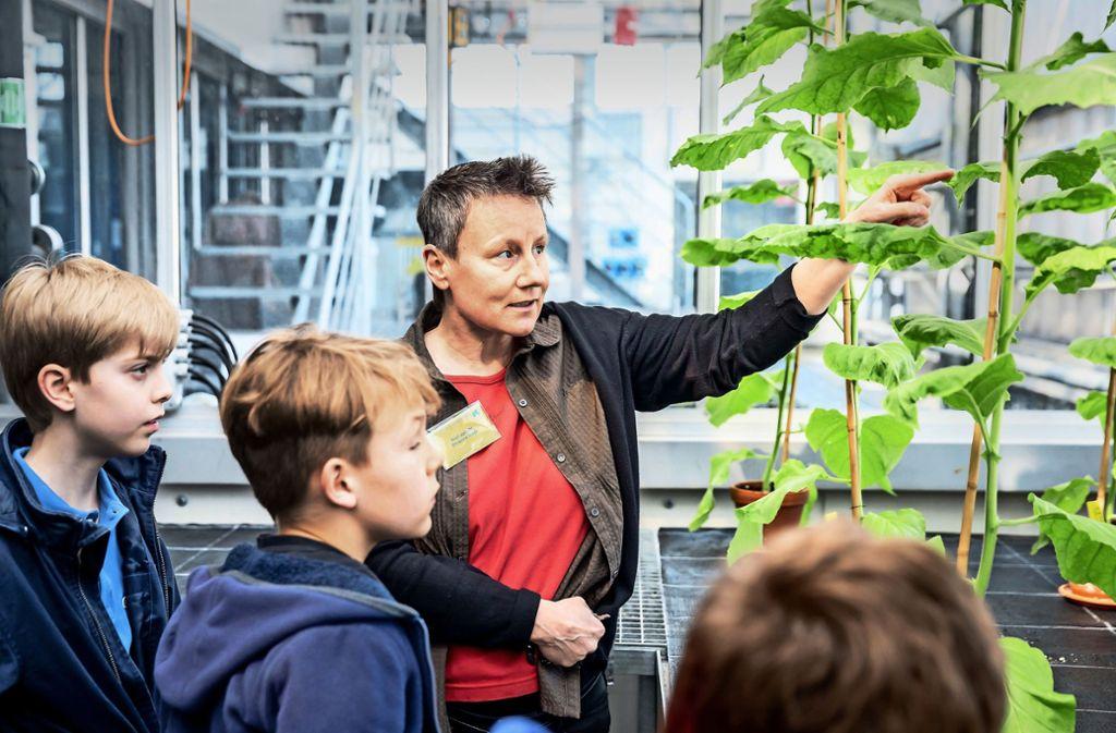 Ein Besuch im Labor: Nachwuchstudenten erforschen das Innere von Pflanzen – und entdecken Pflanzenviren. Foto: Lichtgut/Julian Rettig