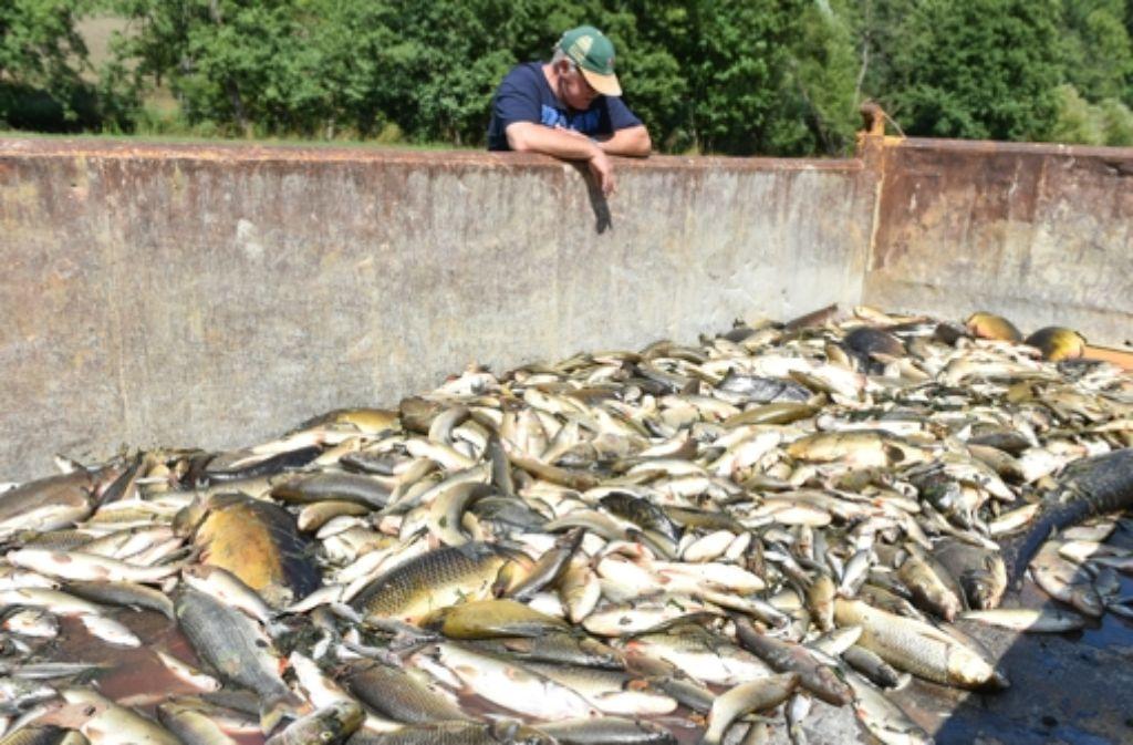 Tausende toter Fische haben freiwillige Helfer nach dem Chemieunfall aus der Jagst geborgen. Foto: dpa