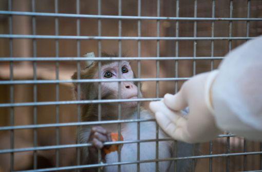 Prozess wegen mutmaßlicher Tiermisshandlung an Affen beginnt