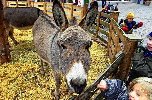 Rentier statt Ochs und Esel