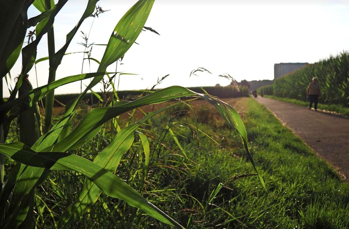 Die Birkacher bewegt beim OB-Besuch vor allem ein Thema: die Frage nach einer Bebauung des Birkacher Feldes. Foto: Frank Wahlenmaier