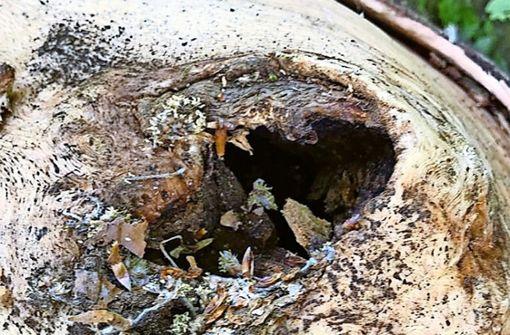 Baumfällungen sorgen erneut für großen Unmut