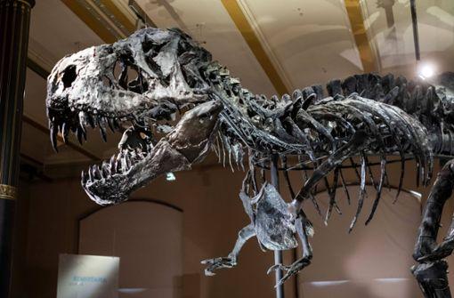 Forscher entdecken uralte Dinosaurier-DNA