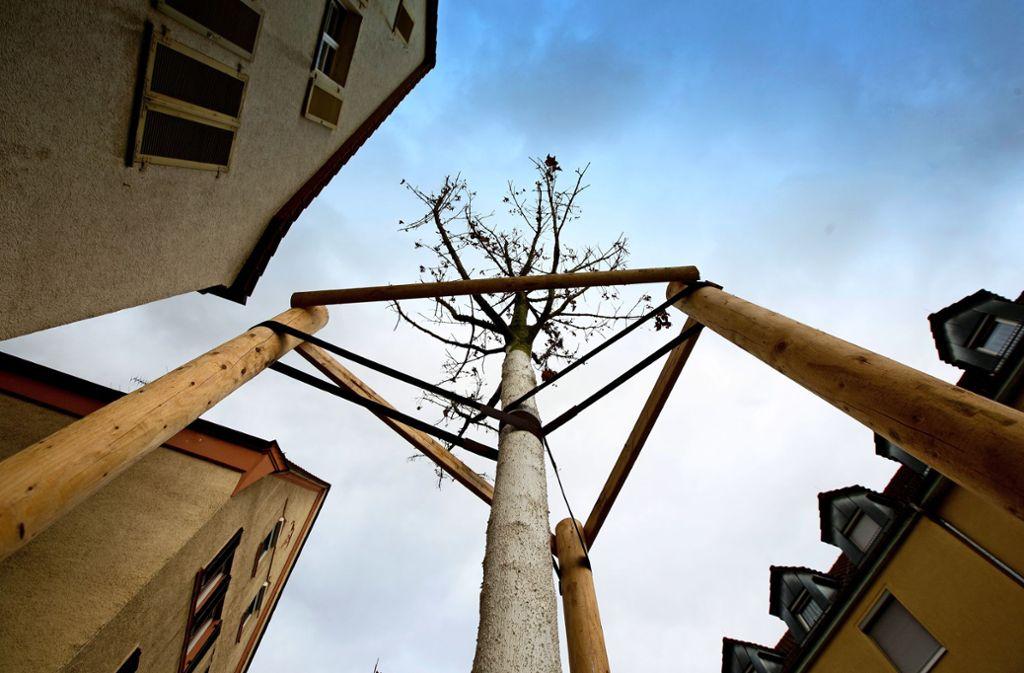 Neupflanzungen sollen helfen, die Innenstadtquartiere vor Überhitzung zu schützen. Foto: Horst Rudel